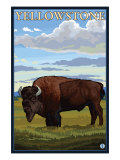 Bison Scene, Yellowstone National Park Print