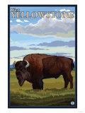 Bison Scene, West Yellowstone, Montana Posters