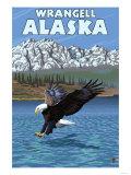 Bald Eagle Diving, Wrangell, Alaska Posters
