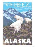 Mountain Goats Scene, Valdez, Alaska Print
