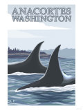 Orca Whales No.1, Anacortes, Washington Posters by  Lantern Press