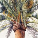 Roma Palm Posters by Lois Brezinski