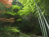Bamboo Forest, Hokokuji Temple Garden, Kamakura, Kanagawa Prefecture, Japan, Asia Photographic Print by Chris Kober