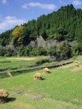 Harvest Time, Kokonoe, Oita, Japan Photographic Print by Chris Kober