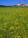 Church and Wild Flowers, Vik, Iceland Photographic Print by Chris Kober