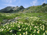 Mountain Flowers, Hakusan National Park, Japan Photographic Print by Chris Kober