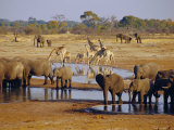 Giraffe and Elephant at a Water Hole, Etosha National Park, Namibia Photographic Print by Chris Kober