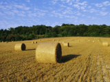 Hay Bales in a Field in Late Summer, Kent, England, UK, Europe Photographic Print by David Tipling