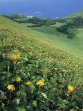 Rebun Island Coastline and Mountain Flowers, Hokkaido, Japan Photographic Print by Chris Kober