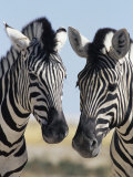 Two Burchell's Zebra, Equus Burchelli, Etosha National Park, Namibia, Africa Photographic Print by Ann & Steve Toon