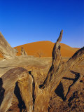 Sand Dunes, Sesriem, Sossusvlei National Park, Namibia Photographic Print by Chris Kober