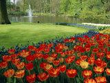 Keukenhof Gardens, Keukenhof, Netherlands Photographic Print by Christian Kober