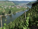 Vineyards on Slopes Above the Mosel River, Gravenburg, Germany, Europe Fotografisk tryk af Oliviero Olivieri