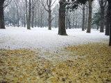 Winter Scene, Yoyogi Koen (Park), Tokyo, Japan Photographic Print by Chris Kober