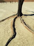 Dead Vlei, Sossuvlei Dune Field, Namib-Naukluft Park, Namib Desert, Namibia, Africa Photographic Print by Ann & Steve Toon