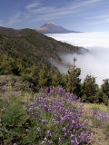 Mount Teide (Pico De Teide), Tenerife, Canary Islands, Spain Lmina fotogrfica por Sergio Pitamitz