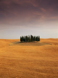 Cypress Trees in Tuscan Field, Val d'Orcia, Siena Province, Tuscany, Italy Photographic Print by Sergio Pitamitz