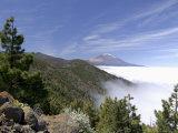 Mount Teide (Pico De Teide), Tenerife, Canary Islands, Spain Lámina fotográfica por Sergio Pitamitz