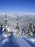 Snow Covered Pines in the Demanovska Valley, Low Tatra Mountains, Slovakia, Europe Photographic Print by Richard Nebesky