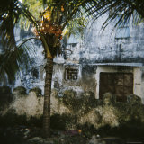 Palm Tree and Old Walls, Stone Town, Zanzibar, Tanzania, East Africa, Africa Photographic Print by Lee Frost