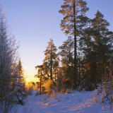Winter Sunset in the Forest Near Oslo, Norway, Scandinavia, Europe Photographic Print by David Lomax