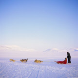 Husky Dog Sled Team, Spitsbergen, Norway, Europe Photographic Print by David Lomax