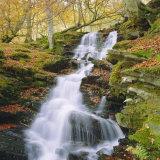 Birks of Aberfeldy, Tayside, Scotland, UK, Europe Fotografisk trykk av Roy Rainford