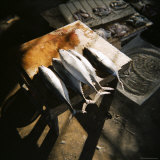 Kingfish Laid on Cutting Block, Fish Market, Stone Town, Zanzibar, Tanzania, East Africa, Africa Photographic Print by Lee Frost