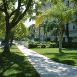 Trees and Grass Along Sidewalk, Beverly Hills, Los Angeles, California, USA Photographic Print by David Lomax