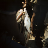 Fresh Fish Bundled with String, Mkokotoni, Zanzibar, Tanzania, East Africa, Africa Photographic Print by Lee Frost