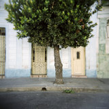 Tree and Architectural Detail, Cienfuegos, Cuba, West Indies, Central America Photographic Print by Lee Frost
