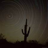Star Trek Over Cacti, Tracing Stars as They Move Round North Star, Tucson, Arizona, USA Photographic Print by Tony Gervis