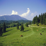 Apline Pastures on the Edge of the Bucegi Mountains, Carpathian Mountains, Transylvania, Romania Photographic Print by Christopher Rennie
