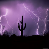 Cactus Silhouetted Against Lightning, Tucson, Arizona, USA Photographic Print by Tony Gervis
