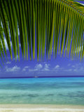 Palm Frond and Beach, Rangiroa Atoll, Tuamotu Archipelago, French Polynesia, South Pacific Islands Photographic Print by Sylvain Grandadam