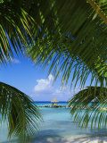Palm Fronds and Beach, Rangiroa Atoll, Tuamotu Archipelago, French Polynesia, South Pacific Islands Photographic Print by Sylvain Grandadam