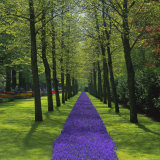 Keukenhof Gardens, Near Amsterdam, Holland (The Netherlands), Europe Photographic Print by Roy Rainford