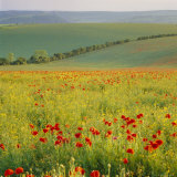 Poppy Fields, South Downs, Sussex, England, UK, Europe Photographic Print by John Miller