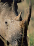 White Rhonoceros (Rhino), Ceratotherium Simum, Hluhluwe Game Reserve, Kwazulu-Natal, South Africa Photographic Print by Ann & Steve Toon