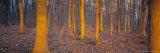 John Miller - Winter Woodland, England, UK, Europe - Fotografik Baskı