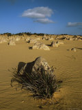 Limestone Pillars in the Pinnacles Desert, Australia, Pacific Photographic Print by Ann & Steve Toon