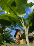 La Maison Du Jouir (House of Pleasure), French Polynesia, South Pacific Islands Photographic Print by J P De Manne