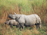 Indian One-Horned Rhinoceros (Rhino), Rhinoceros Unicornis, with Calf, Assam, India Photographic Print by Ann & Steve Toon