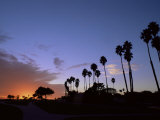 Palm Trees in Silhouette in Park on Bluff Overlooking the Pacific Ocean, Santa Barbara, California Photographic Print by Aaron McCoy