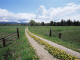 Driveway with Common Dandelion in Flower, Near Glacier National Park, Montana Photographic Print by James Hager