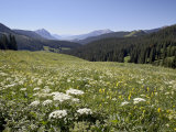 Cow Parsnip and Alpine Sunflower with Crested Butte in Distance, Washington Gulch, Colorado, USA Photographic Print by James Hager