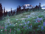 Landscape with Wild Flowers, Mount Rainier National Park, Washington State Photographic Print by Colin Brynn