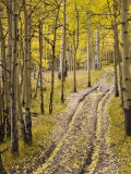 Two-Track Lane Through Fall Aspens, Near Telluride, Colorado Photographic Print by James Hager
