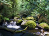 Taggerty River, Tree Ferns and Myrtle Beech Trees in the Temperate Rainforest, Victoria, Australia Photographic Print by Jochen Schlenker