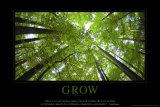 Groei, boomtoppen van onderaf gezien, met Engelse tekst: Grow Poster